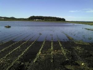flooded field in Goshen